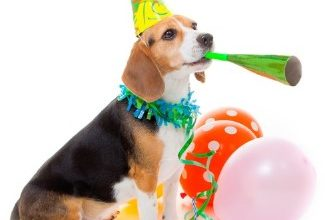 National Dog Day 2019 Wishes, Messages, Quotes, Greetings